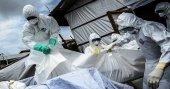 Ebola aşısında yüzde 100 başarı sağlandı