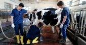 Asırlık liseden günlük süt