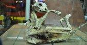 Türü belirlenemeyen hayvan iskeletini iş yerinde sergiliyor